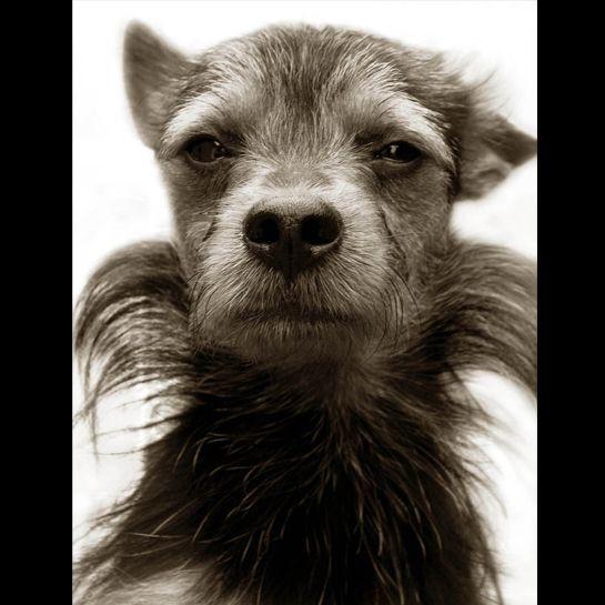 Portraits_dog_08