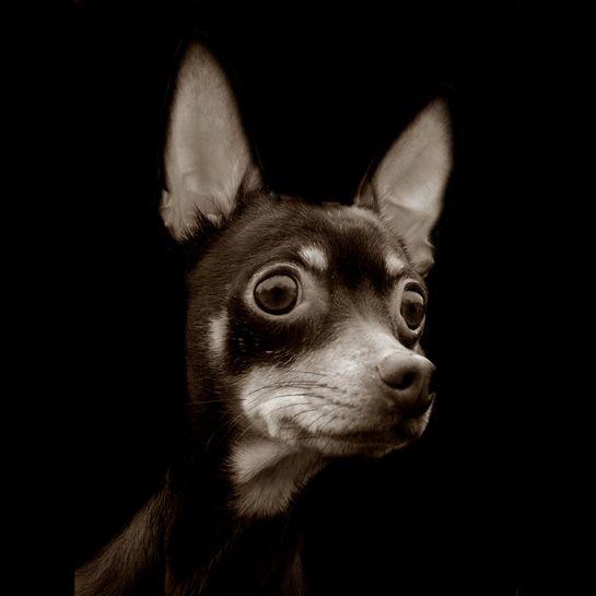 Portraits_dog_09