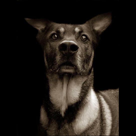 Portraits_dog_10
