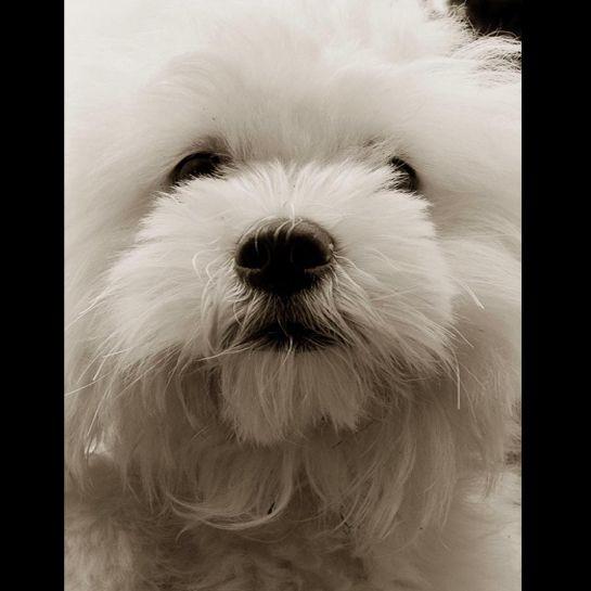 Portraits_dog_11