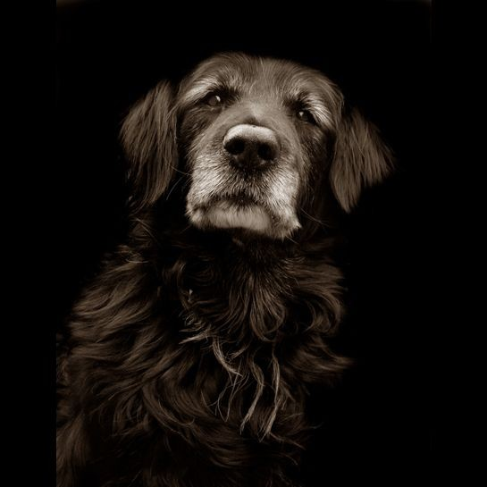 Portraits_dog_12