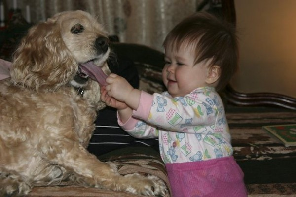 doggy-008