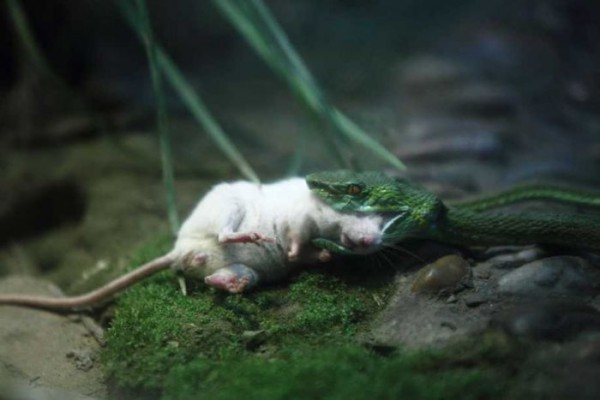 Mouse_03