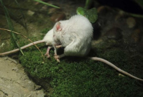 Mouse_05