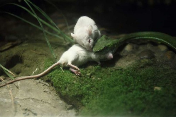 Mouse_06
