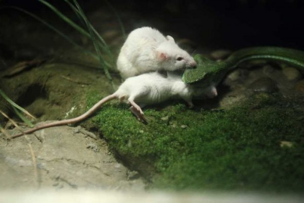 Mouse_09