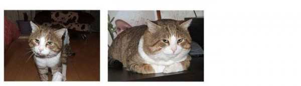 Saved_cats_08