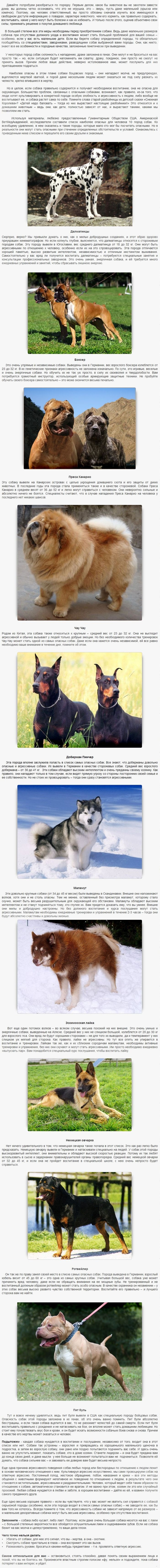 Dangerios_dogs_02