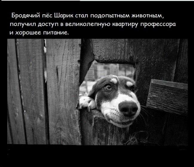 sobachie_serdce_10