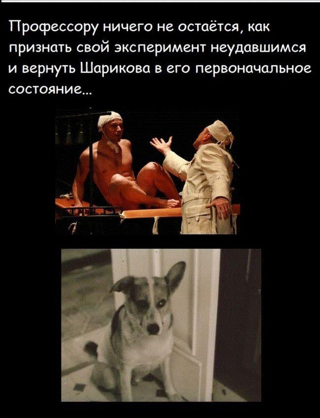 sobachie_serdce_14