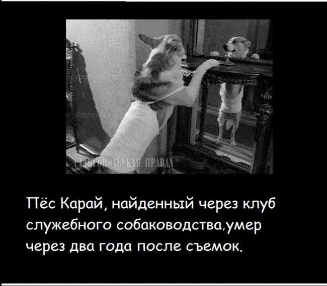 sobachie_serdce_18
