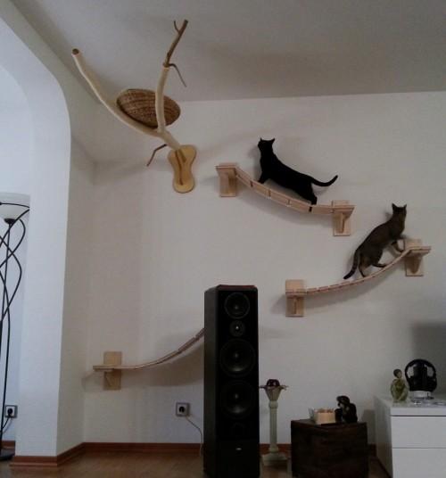Игровая площадка для кота дома - Только самое интересное