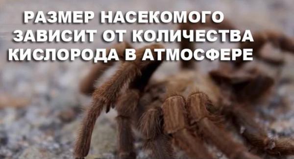 kislorod_21