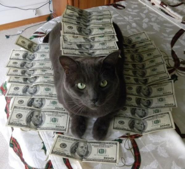 gangcats_01