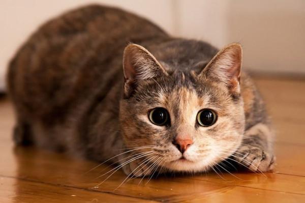 Cats_05
