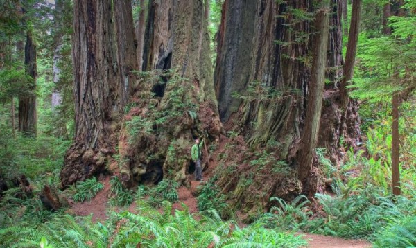Higest_Trees_06