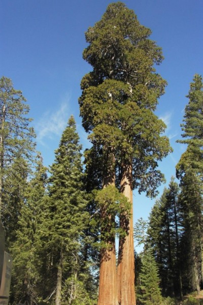 Higest_Trees_09