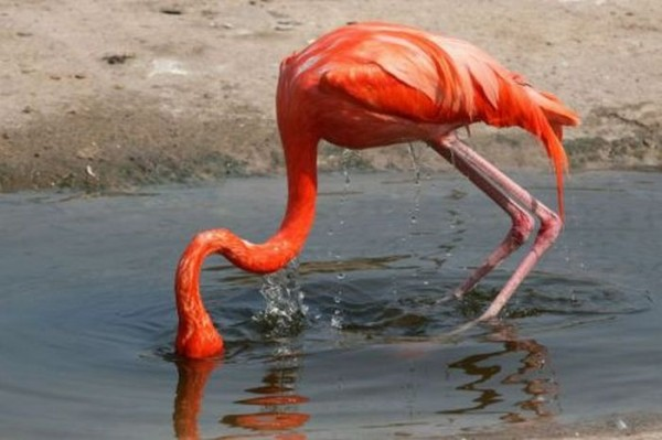 flamingos_01