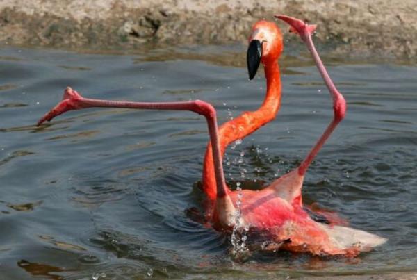 flamingos_02