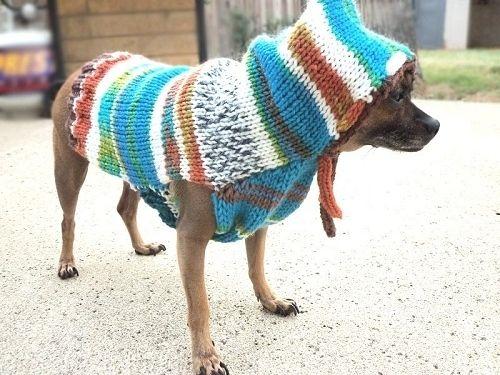 pet_fashion_04