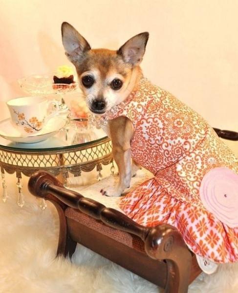 pet_fashion_08