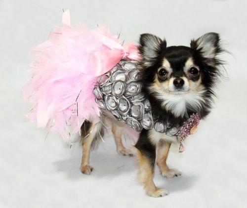 pet_fashion_09