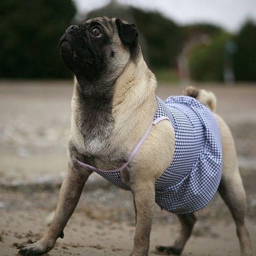 pet_fashion_10