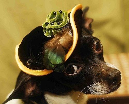 pet_fashion_17