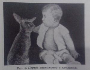 w-baby-rabbit