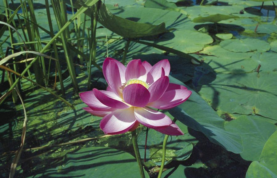 Lotus-02