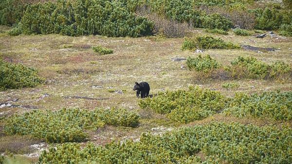 Медведи15