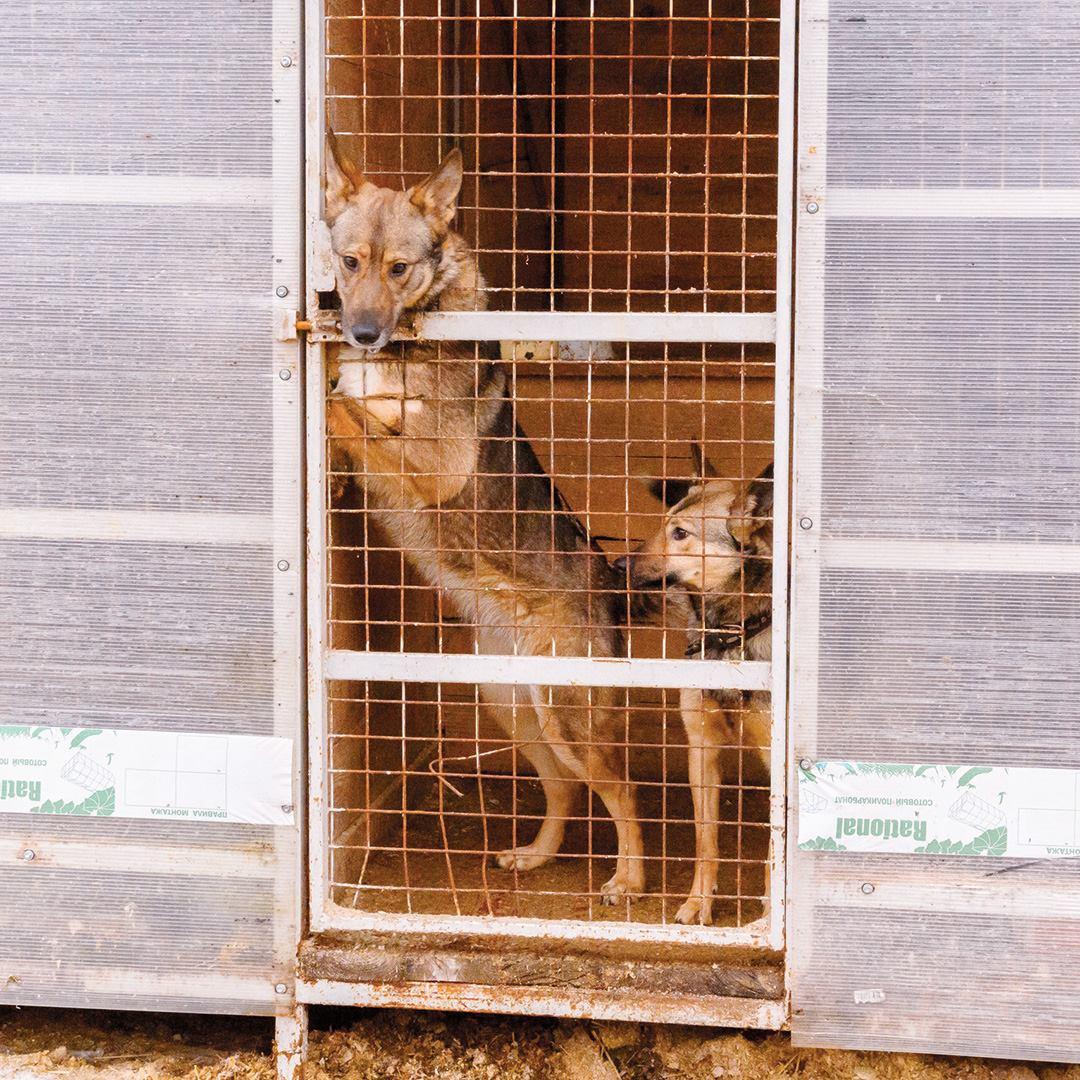 Отправили полтонны вещей в ярославские приюты для животных