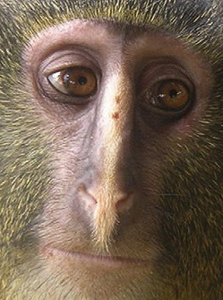 Есть ли узда на Приматический Элемент в науке?