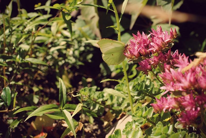бабочкаzz