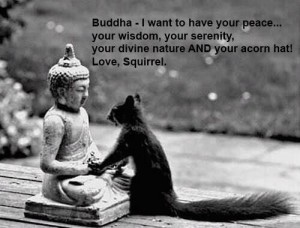 Buddhas-Acorn-Hat
