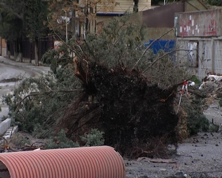 08.12.2013г. Адлер, Весёлое, уничтожен кипарис 2