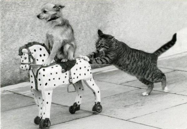 игры животных