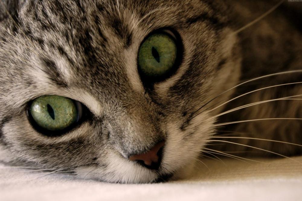 beautiful-cats-wallpapers-1