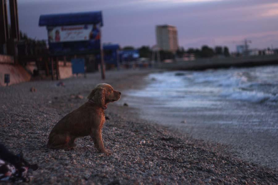 собакен на финал