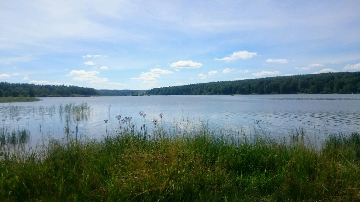 Лыткарино озеро волкуша фото