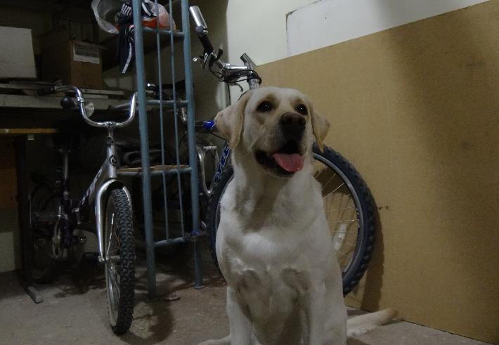 собака в гараже