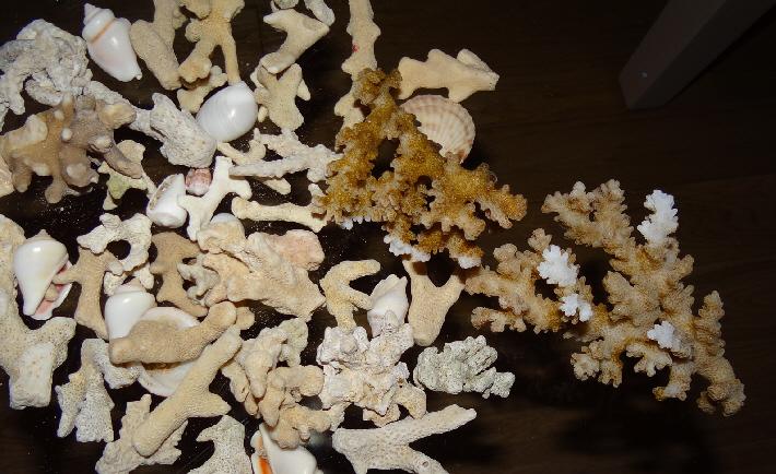 Египетские кораллы