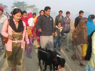 After some 15,000 water buffaloes were offered to goddess Gadhimai on the first day of the five-early religious fair Tuesday, thousands of goats were sacrificed - Republica