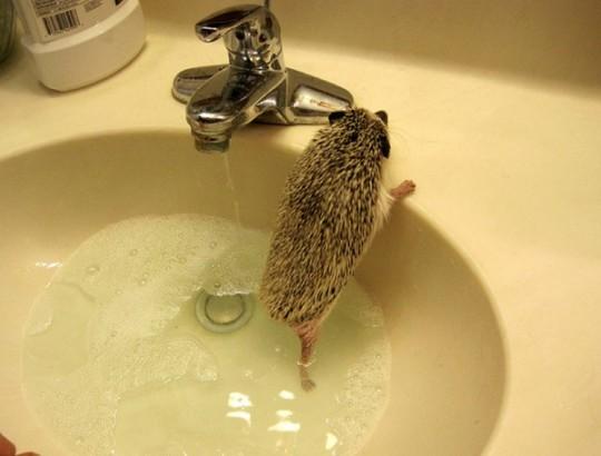 Как моются ежики18