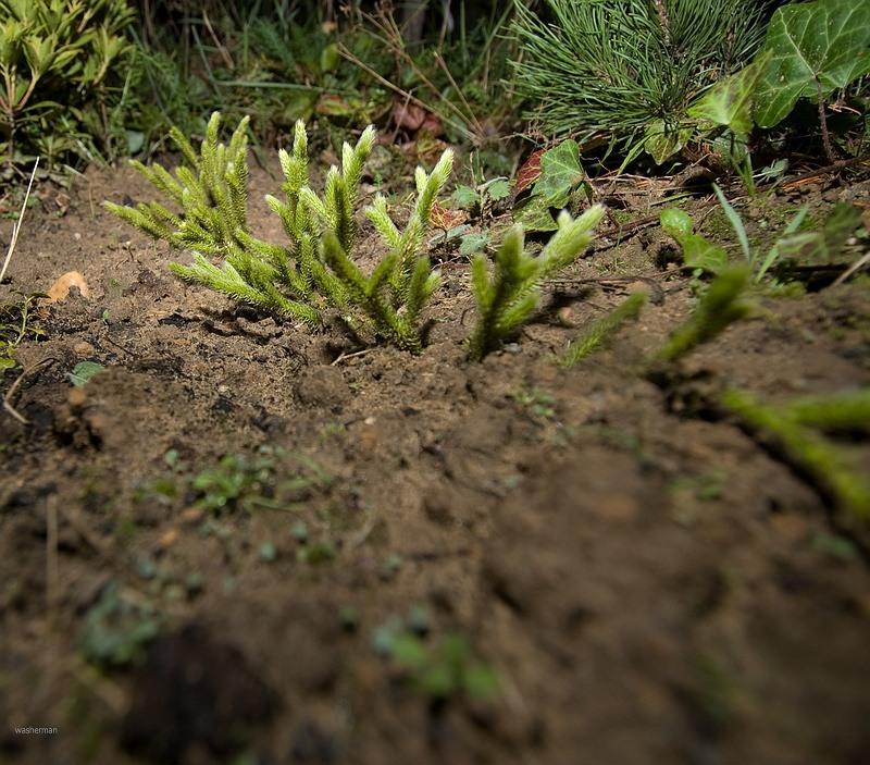 какие растения любят песчаную почву с фото дерево