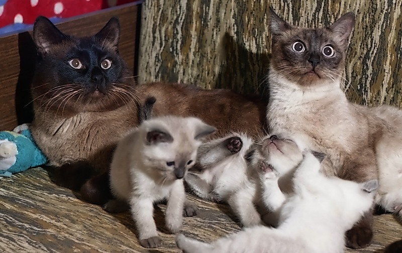 Нафаня, Маруся и их дети (одного из котят зовут Джонни-Муха)
