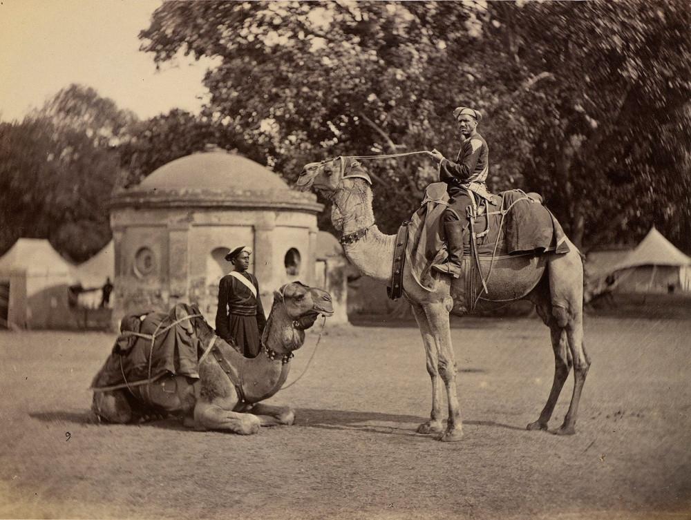 Слоны и набобы