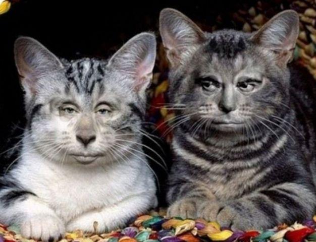 genty-cat.jpg
