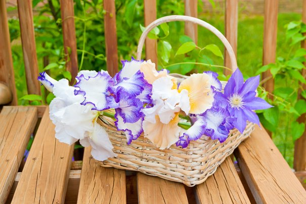 FlowersBasket