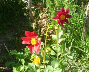 cvetiki